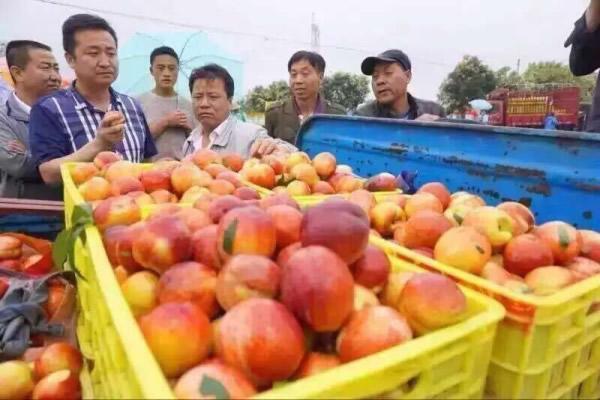 韵达速递成功开通眉县油桃运输绿色通道