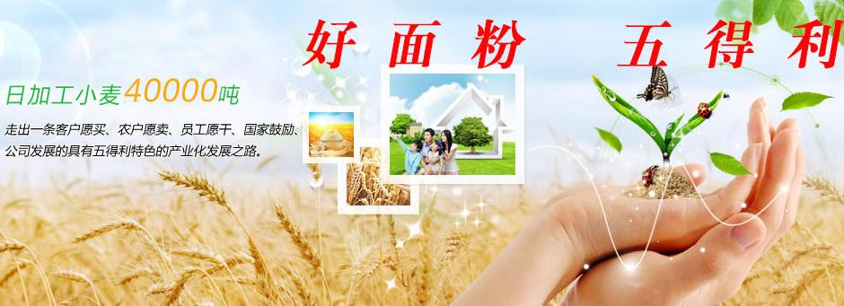 五得利建世界最大单体面粉车间 助力中国面粉业迈上新台阶