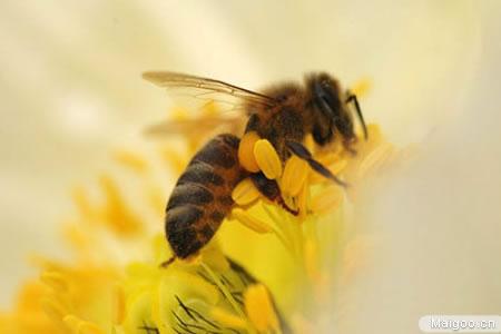 [蜂胶品牌]知蜂堂蜂胶经销商告诉你:如何选购蜂胶